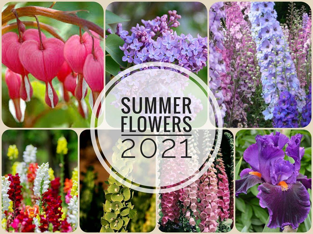 Natalia Ananieva - Summer Flowers 2021