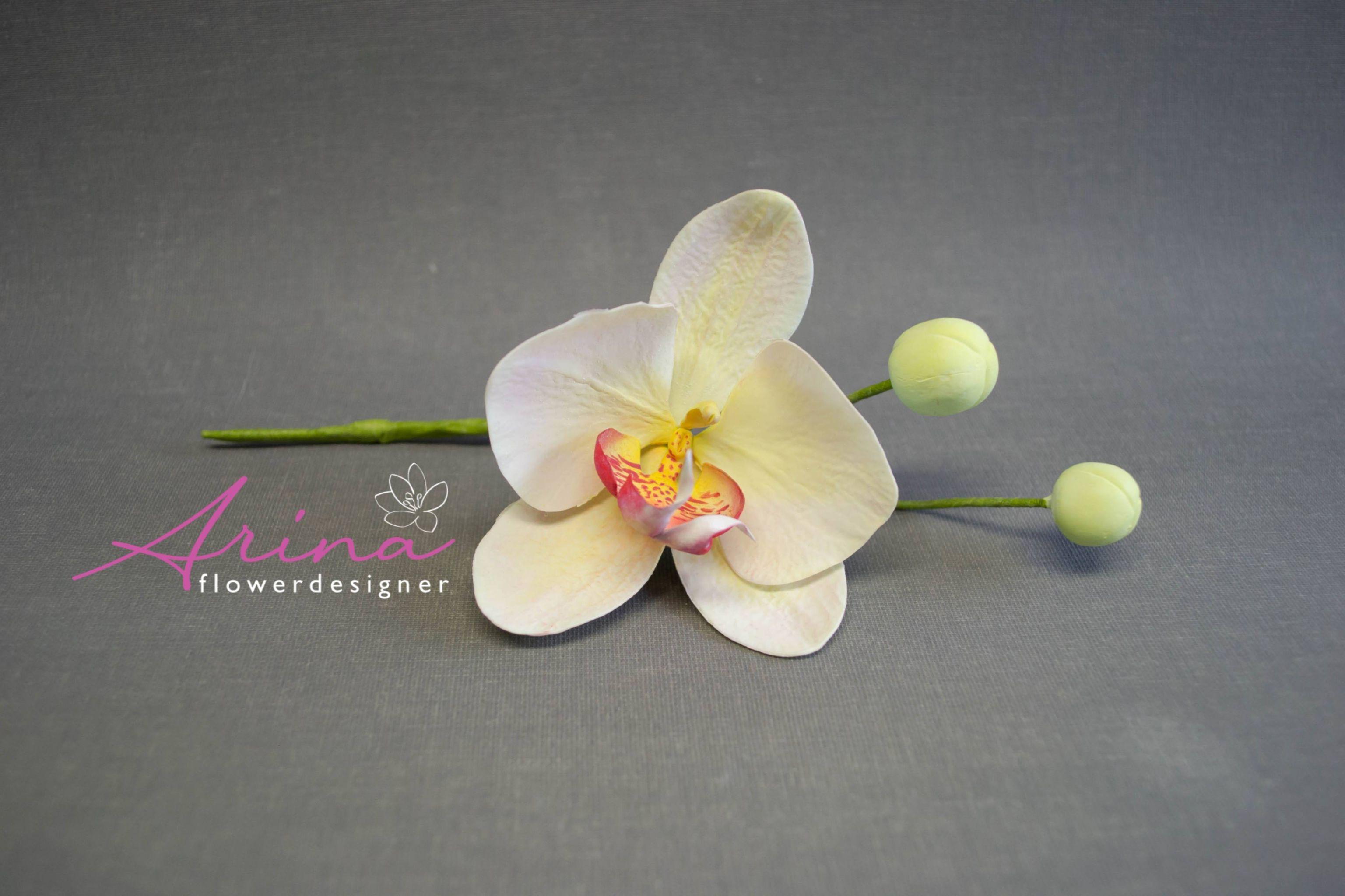 Workshops Online met Arina - Phalaenopsis Orchid - Moth Orchidee
