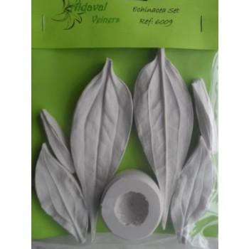 Aldaval Echinacea set
