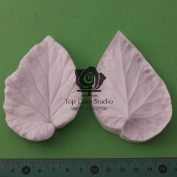 Blooms Begonia Leaf L