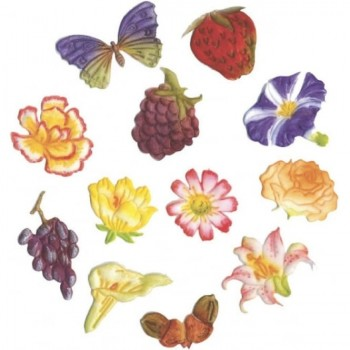 FMM Flower & Fruit tappits