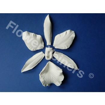 flowerveiners.com, cakeshop.nl, cattleya, orchidee