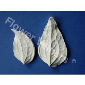 Flower Veiners Clematis Leaf set S - M