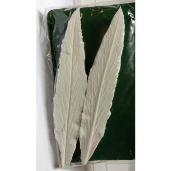 SK Great Impressions Leaf Veiner Hellebore Orientalis 12 cm