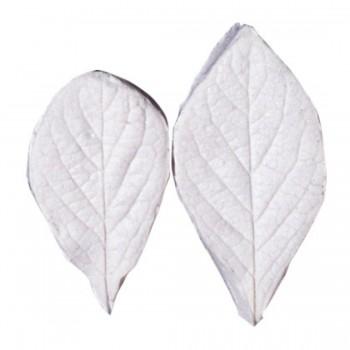 SK Great Impressions Leaf Veiner Honeysuckle - Fly (Lonicera) Set of 2