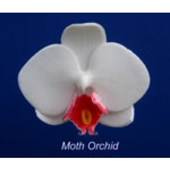 Hawthorne Hill Moth Orchid Set Small