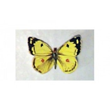 Hawthorne Hill Pale Clouded Yellow Butterfly
