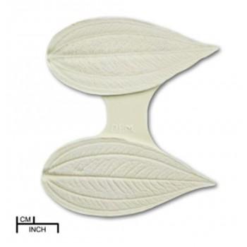 DPM Viburnum leaf veiner 2