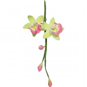 PME Cymbidium orchid set/2