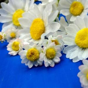 Workshop voor beginners - Bloemen van Ouwel