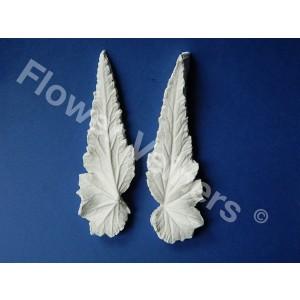 begonia, flowerveiner, flowerveiners, veiners, blad, alan dunn