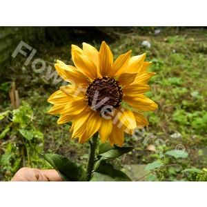 Flower Veiners Helianthus Sunflower Petal - Small