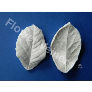 Flower Veiners Rosa Chinensis Rose Leaf S
