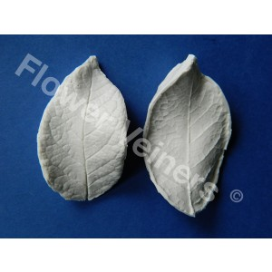 Flower Veiners Rosa Chinensis Rose Leaf M