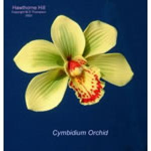 Hawthorne Hill Cymbidium Orchid Set S