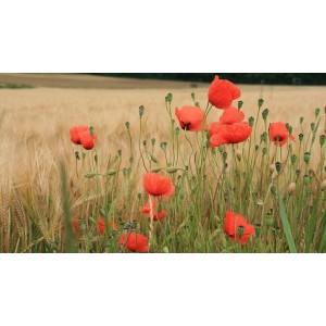Cursus Suikerbloemen - Veldbloemen