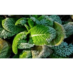 Tinkertech Primrose Leaf 564-565