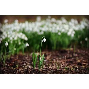 Cursus Suikerbloemen - Voorjaar
