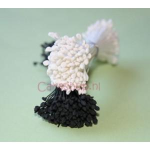 Stamens Small Hammerhead White