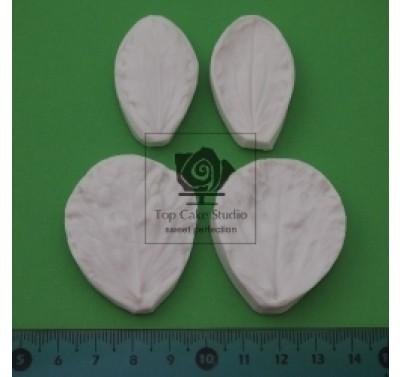 Blooms Sweet Pea Leaf set