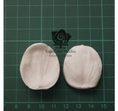 Blooms Helleborus Petal