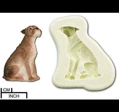 DPM Dog - Boxer