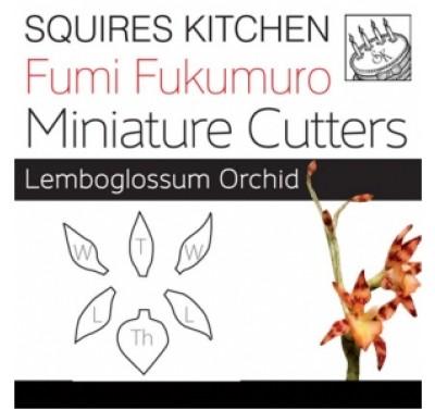 Fumi Fukumuro Miniature Lemboglossum Orchid
