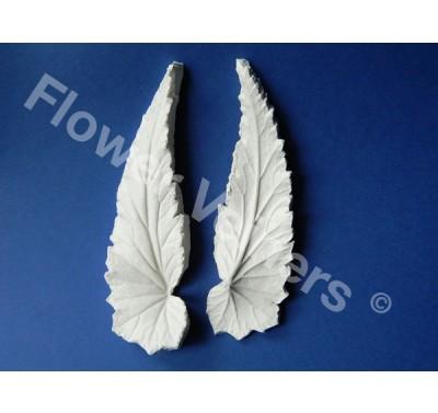 Flower Veiners Begonia Leaf L