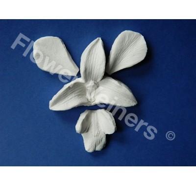 Flower Veiners Dendrobium Orchid