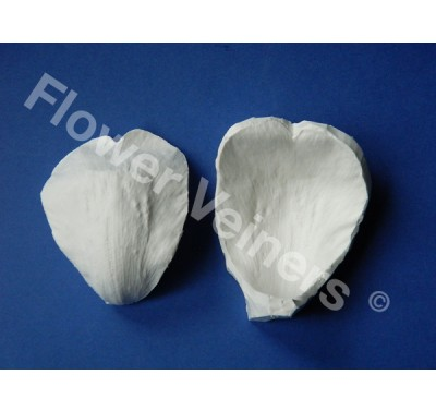 Flower Veiners Paeonia Peony Outer Petal