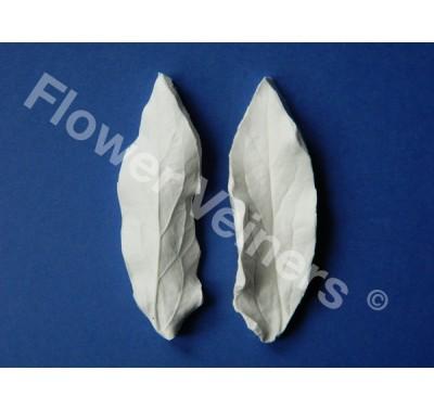 Flower Veiners Paeonia Peony Leaf S