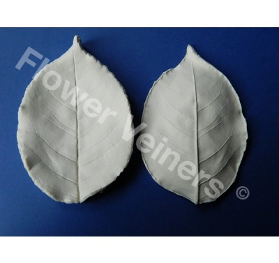 Flower Veiners Rosa Chinensis Rose Leaf XXL