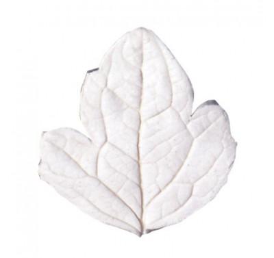 SK Great Impressions Leaf Veiner Clematis XL