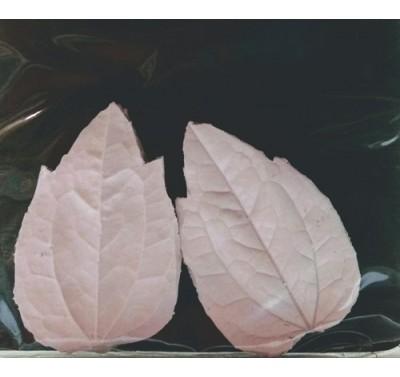 SK Great Impressions Leaf Veiner Clematis M