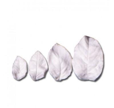 SK Great Impressions Leaf Veiner Rose Curiosity Set/4
