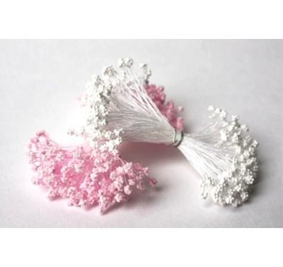 Stamens Gypsophila Pink