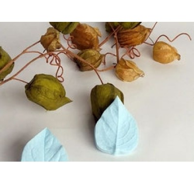 Mould Manufaktur Chinese Lantern Leaf Veiner