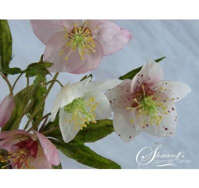 Gastworkshop Petya Shmarova - Poinsettia, Hellebore, Foliage & Berries