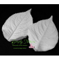 Hydrangea Leaf Large Veiner By Simply Nature Botanically Correct Products®