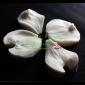 Dogwood Petal Veiner Set Medium By Simply Nature Botanically Correct Products