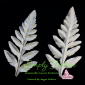 Poppy Leaf Large Veiner By Simply Nature Botanically Correct Products®