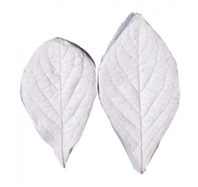 SK Great Impressions Leaf Veiner Honeysuckle - Fly (Lonicera) L